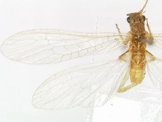 drosophila melanogaster database
